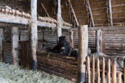 Weitere Dorfbewohner